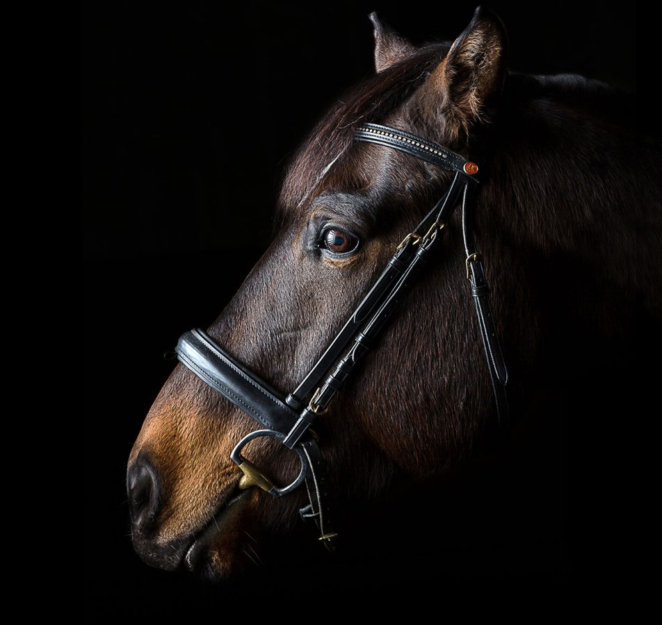 Pferde- & Tierfotografie