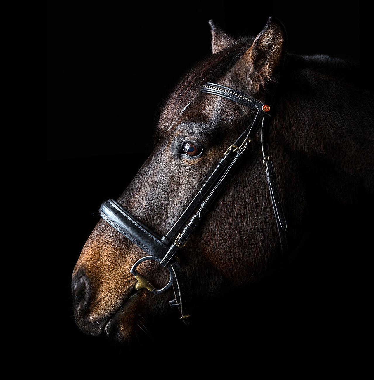 Tier- und Pferdefotografie